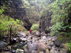 Hiking through Koloa Gulch