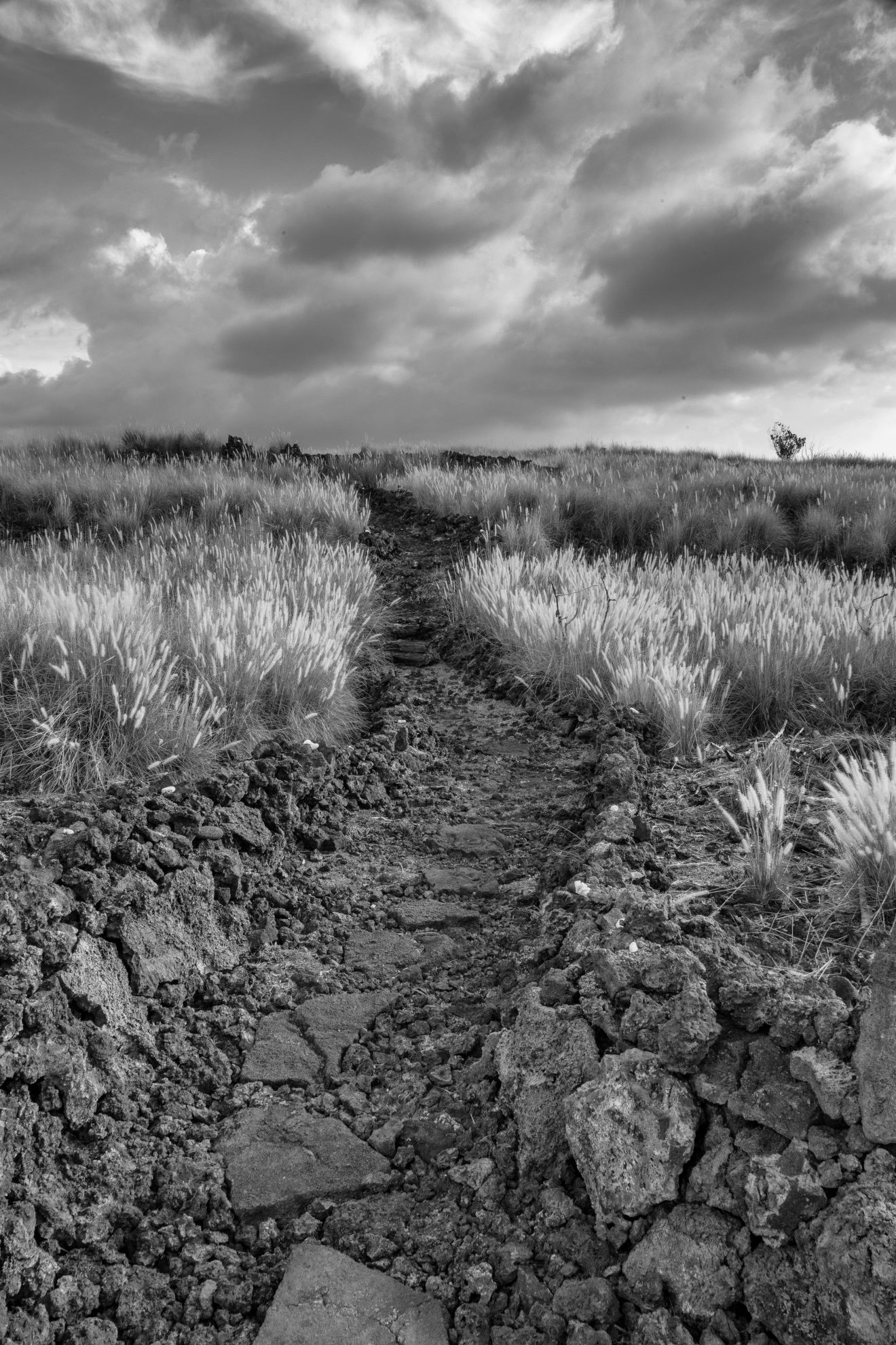 20161117-IMG_9068-LuAi-025-B&W Palamanui Trail